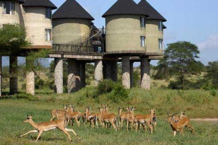 Sarova Salt Lick Game Lodge in Kenya