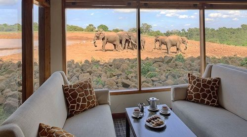 A group of elephants observed through a window at the Ark Lodge in Aberdare National Park