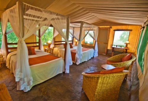 View of the inside of a safari tent at Oloshaiki Camp