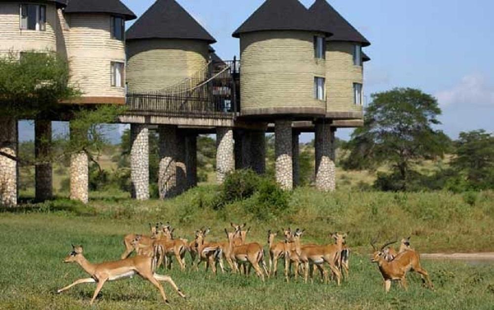 Sarova Salt Lick Game Lodge in Taita Hills Wildlife Sanctuary