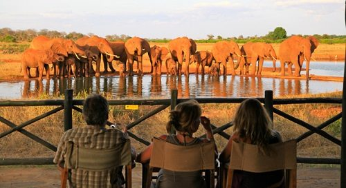 group of people watching elephants at the waterhole at Voi Wildlife in Tsavo East